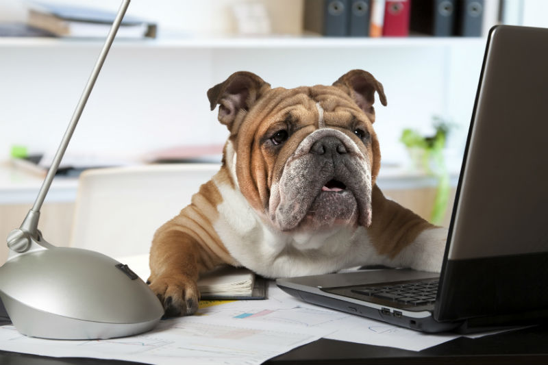 Should You Rethink Your Office Pet Policy?